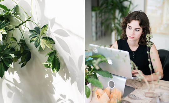 business woman looking at laptop trying to figure out SEO for her website blog with ubersuggest